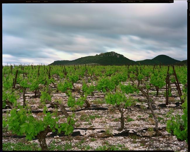 """Visite commentée de la photo """"Arboras, Hérault, Mai 2007"""" de raymond Depardon PIC-SAINTLOUP"""