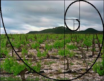 """Visite commentée de la photo """"Arboras, Hérault, Mai 2007"""" de raymond Depardon PIC_FIBO1"""