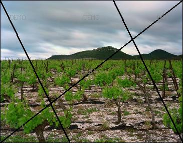 """Visite commentée de la photo """"Arboras, Hérault, Mai 2007"""" de raymond Depardon PIC_FIBO2"""