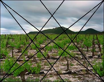 """Visite commentée de la photo """"Arboras, Hérault, Mai 2007"""" de raymond Depardon PIC_FIBO3"""