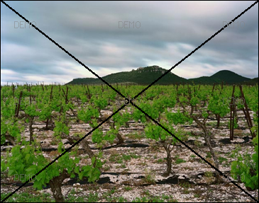 """Visite commentée de la photo """"Arboras, Hérault, Mai 2007"""" de raymond Depardon PIC_FIBO5"""