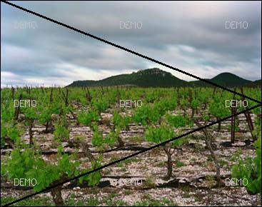 """Visite commentée de la photo """"Arboras, Hérault, Mai 2007"""" de raymond Depardon PIC_FIBO7"""